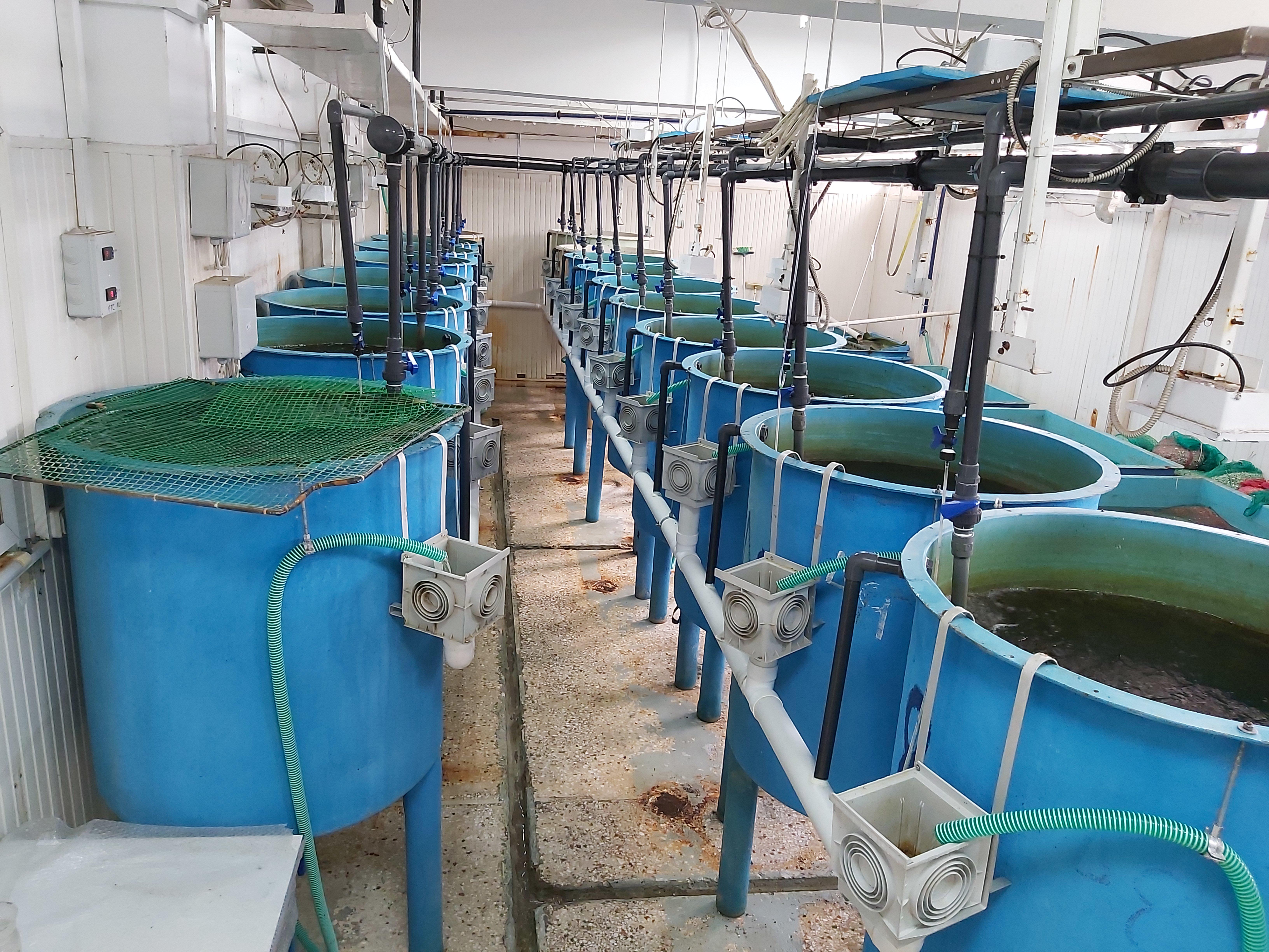 Το Εργαστήριο Πειραματικής Σίτισης (Aqua Lab) Ιχθύων στις εγκαταστάσεις του ΕΛΚΕΘΕ που φιλοξενούνται στο Γεωπονικό Πανεπιστήμιο Αθηνών (2).